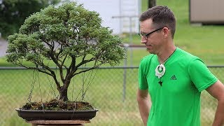 Bonsai Tips and Tricks with Ben!