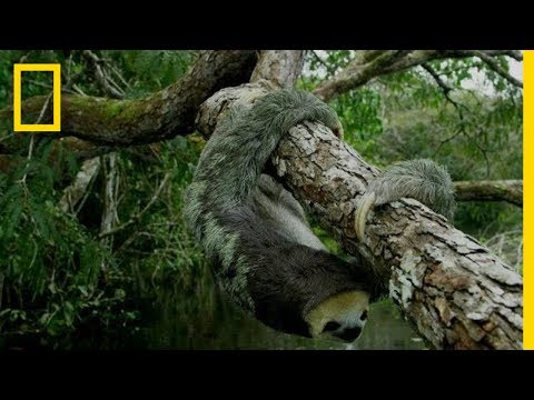 Video trailer för Welcome to Hospitable Planet | National Geographic