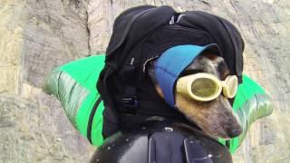 Смотреть онлайн Собака экстремал - летает с хозяином в вингсьюте