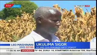 Ukulima wa mahindi maeneo ya Sigor kaunti ya West Pokot baada ya usaidizi wa KVDA