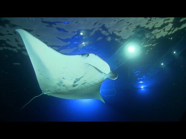 Manta Ray Night Snorkel Kona with Liquid Hawaii Charters - Big Island, Hawaii - HD 720p
