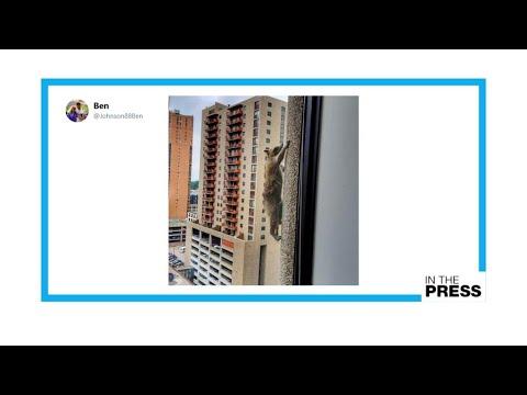 Social climber: Minnesota raccoon climbs skyscraper, becomes national hero