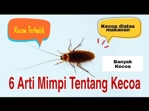 6 Arti Mimpi Tentang Kecoa | 6 meanings of dreams about cockroaches