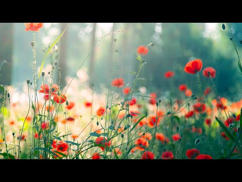 Morning Relaxing Music - Piano Music for Stress Relief and Studying (Riley)