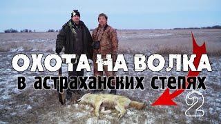 Охота на волка в астраханских степях | Волк загнал фермера на столб!