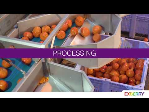 EXBERRY® Processing