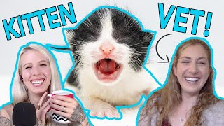 Veterinary Care for Baby Kittens