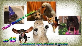 Смешное про кошек и собак. Такие Милые и Смешные #15