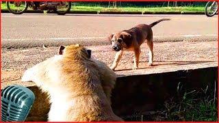 приколы собаки #12 милые щенок и пес
