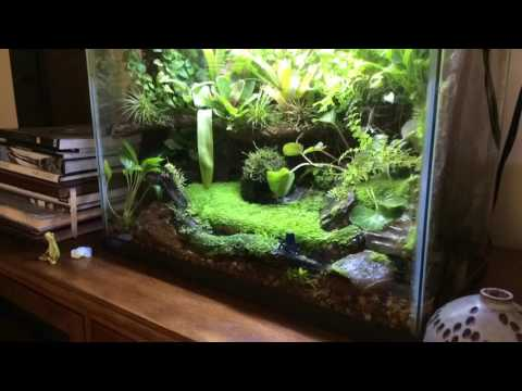 Time lapse video of my dart frog