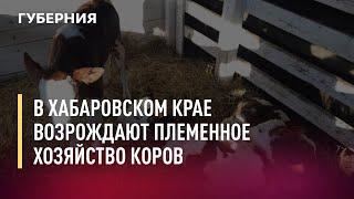 В Хабаровском крае возрождают племенное хозяйство коров. 19/07/21