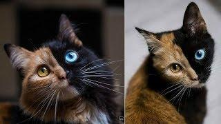 أشهر 18 حيوان أليف على الإنترنت 2018