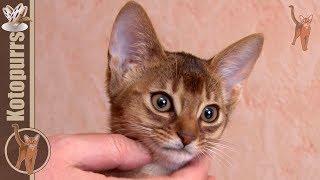 Оригинальное кошачье мурчание [kotopurrs]