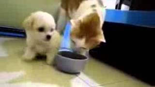 Cat VS Dog  Really Funny Videos   Download For Free On Mobango Com