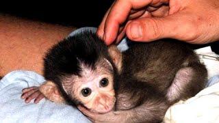 Маленькие Обезьянки - смешные и милые дети обезьян Видео  [NEW HD]