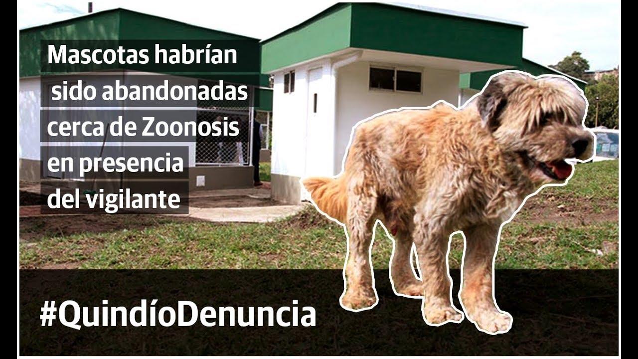 Perritos habrían sido abandonados cerca de Zoonosis en presencia del vigilante