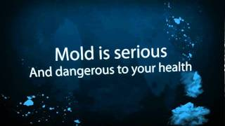Mold Removal Loganville