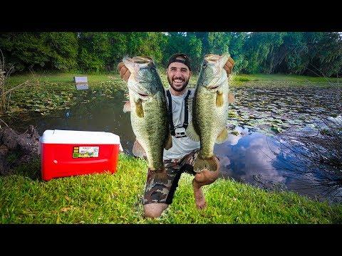 Stocking Pond With Giant WILD Pet Bass!! (big bass pond)