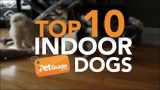 Top 10 Best Indoor Dogs