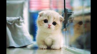 Смешные Коты и Котята   😻Милахи Коты 😻   Приколы с котами и кошками