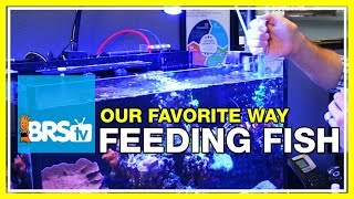 FAQ #13: How do we feed the fish in our 160 gallon reef aquarium? | 52 FAQ