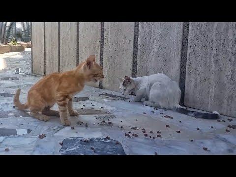 Come trattare bimbi vermi
