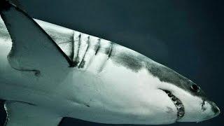 Океаны.Самые опасные животные.