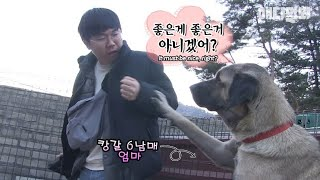 Why did the mama Kangal dog tell the producer to release his fist?