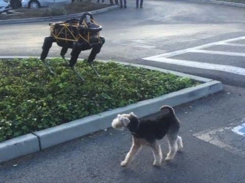 Raw: Real Dog Meets Robot Dog