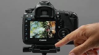 Canon 5D tutorial: AF Point Display | lynda.com