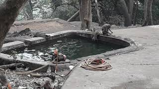 Funny Monkey Playing on Water Pond