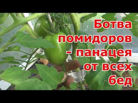 Томатная ботва от вредителей и как удобрение.