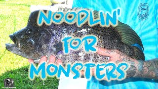 Dovii Noodling In Southern Florida