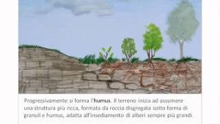 La formazione del suolo