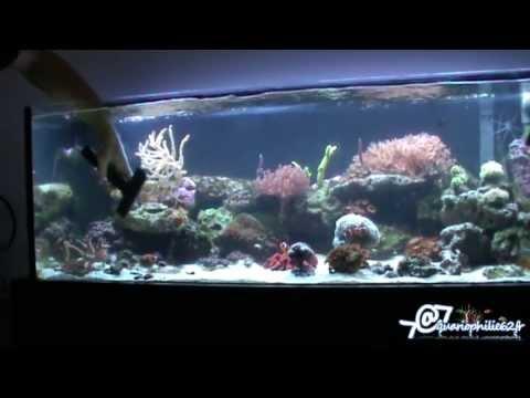 comment nettoyer aquarium poisson rouge