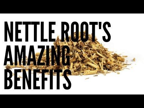 Video Nettle Root Benefits