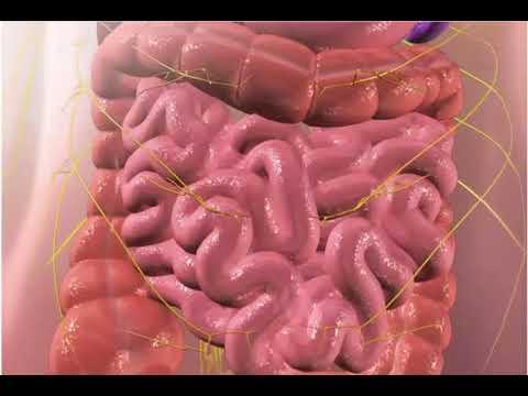 Резонансная терапия от паразитов