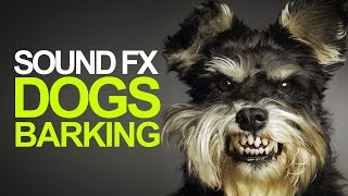DOG BARKING | Sound Effect [High Quality]