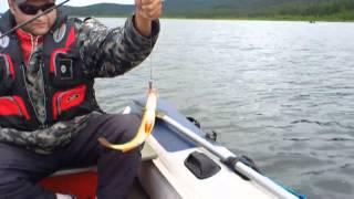 Рыбалка в чивыркуйском заливе летом