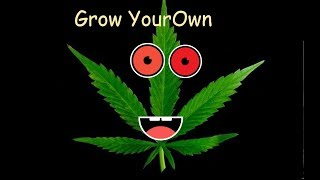 The Flowering Period of the Cannabis plant in less than 60 seconds!!! (Read Text for more details')