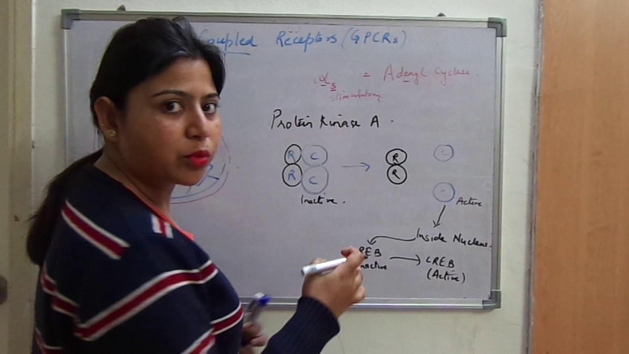 GPCR 1
