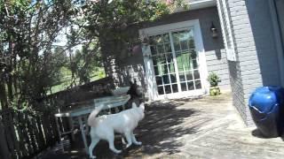 Olaf , Sophia and Bunny Mack 011