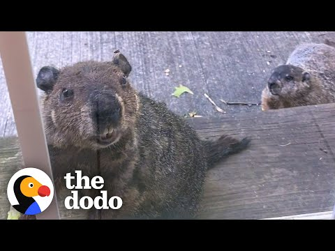 Groundhog Liked the Menu So Much He Brought His Family