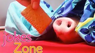 Самые смешные видео недели Август 2016 || Подборка новых смешных видео приколов 2016 Best Jokes №12