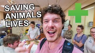 WORLDS LARGEST WILDLIFE HOSPITAL - AUSTRALIA ZOO