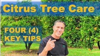 4 KEY TIPS:  Citrus Tree Care + Citrus Orchard Tour