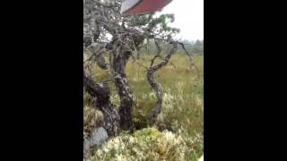 Mossbwerry-Crowberry