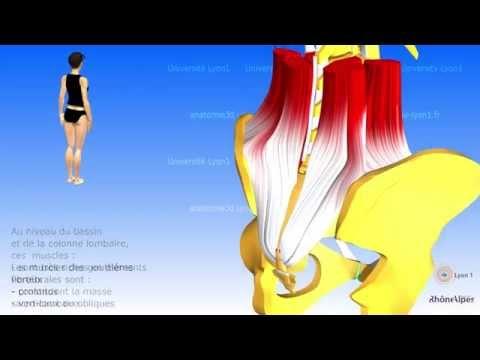 Prokatchka des muscles de vidéo pour les femmes