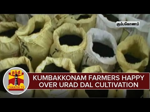 Kumbakkonam-Farmers-happy-over-Urad-Dal-Cultivation-Thanthi-TV