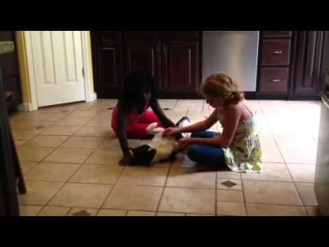 Girls loving on their fosterdog